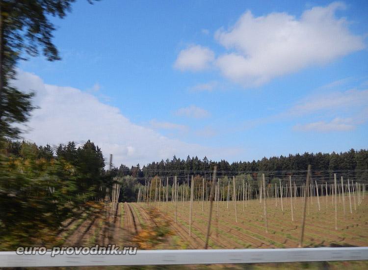 Поля для выращивания хмеля