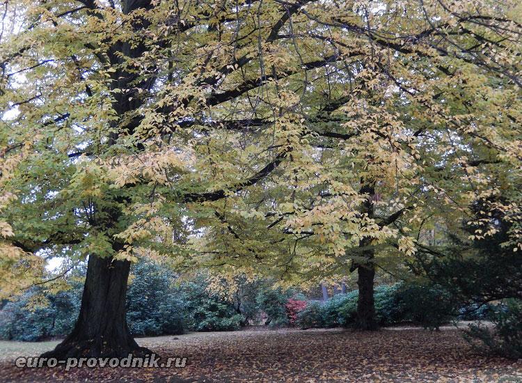 Платаны в парке замка Грубый Рогозец