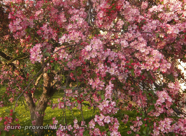 Вояновы сады в цвету