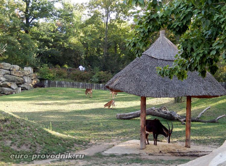 Антилопы на пастбище