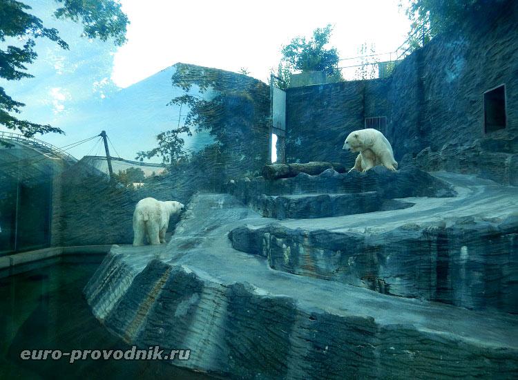 Павильон белых медведей