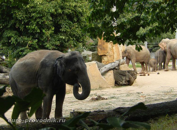 В Долине слонов