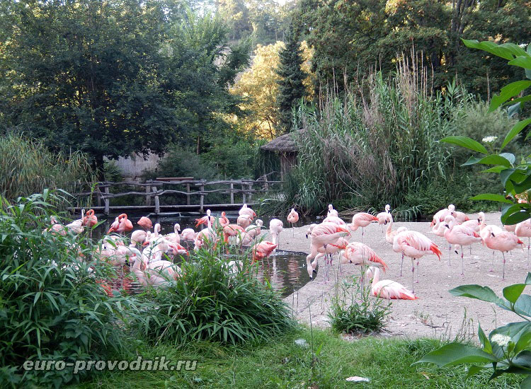 Фламинго в зоопарке Праги