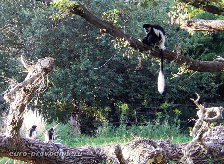 Приматы в Пражском зоопарке