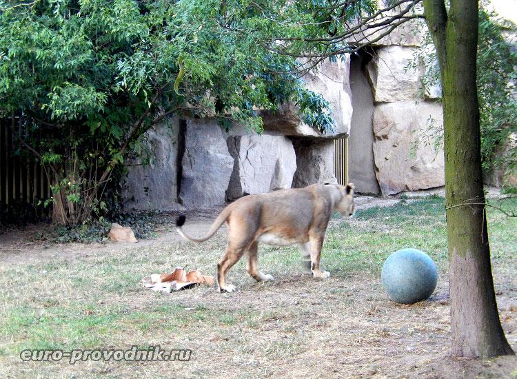 Игры львов