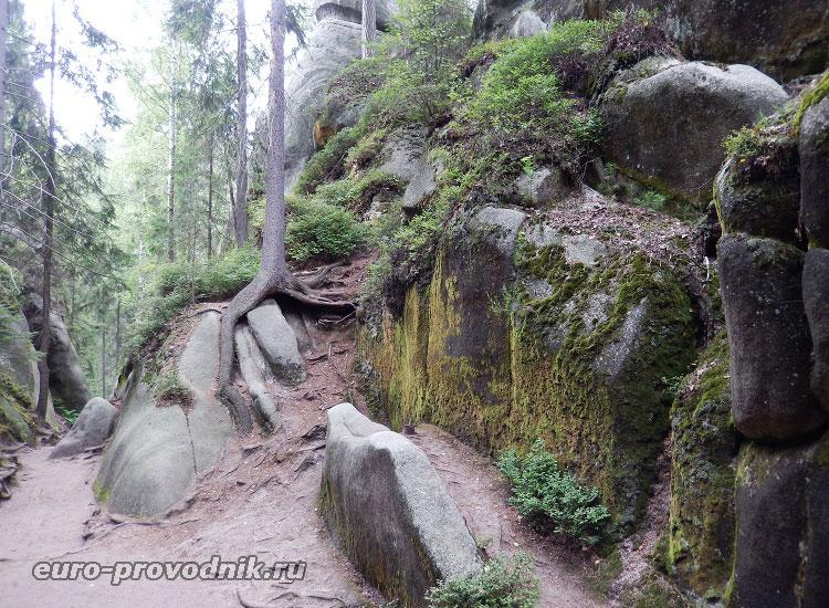 Корни деревьев на скалах