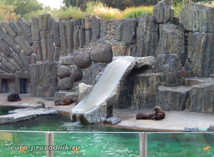 Морские львы и котики