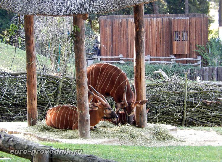 Африканские антилопы