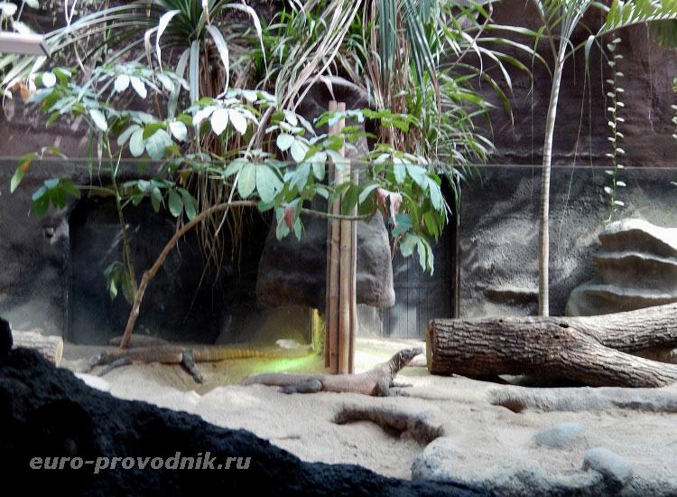 Вараны в зоопарке Праги