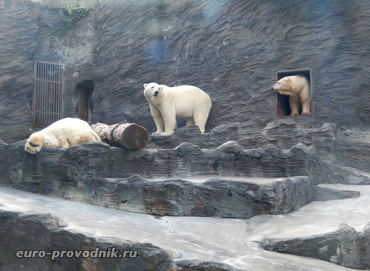 Белые медведи пытаются разбудить главу семейства :)