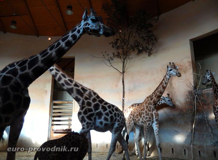 Жирафы в Африканском доме
