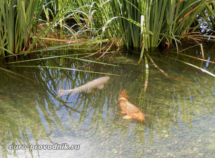 Рыба в Вальдштейнском пруду