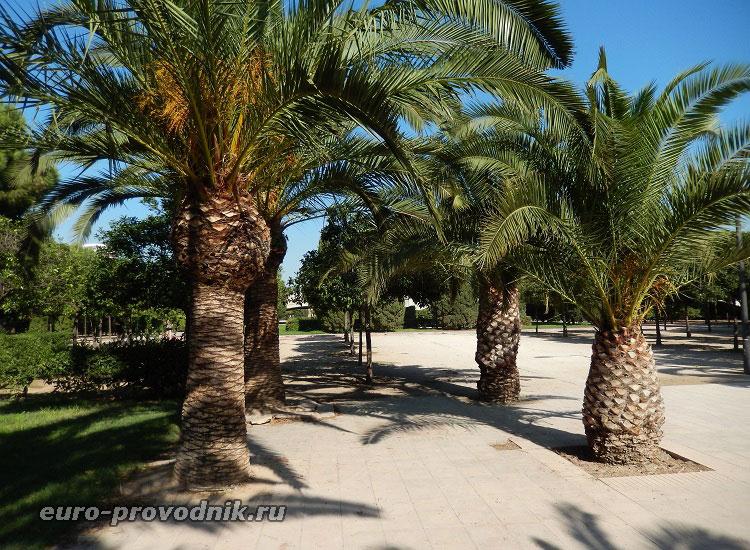 Сады Турии в Валенсии