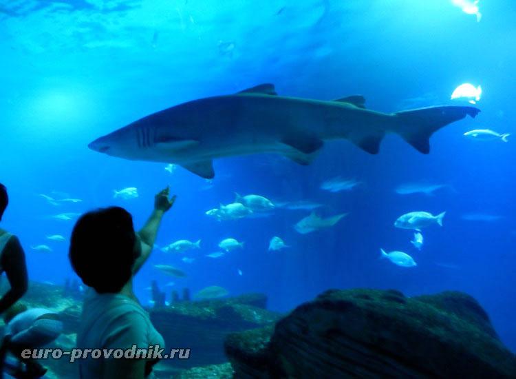 Шлю привет акуле))