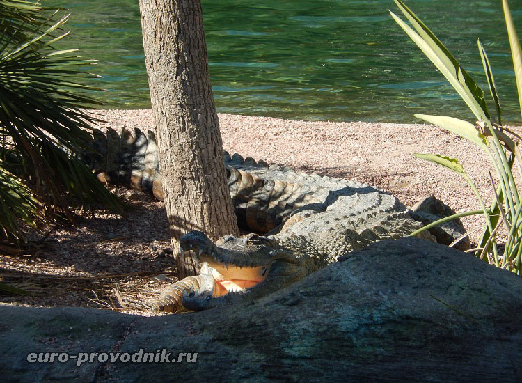 Улыбка крокодила))