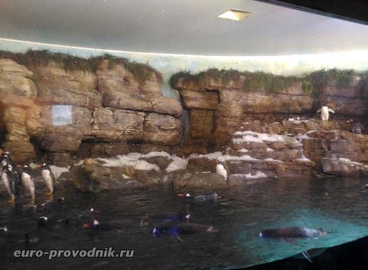 Антарктика и пингвины