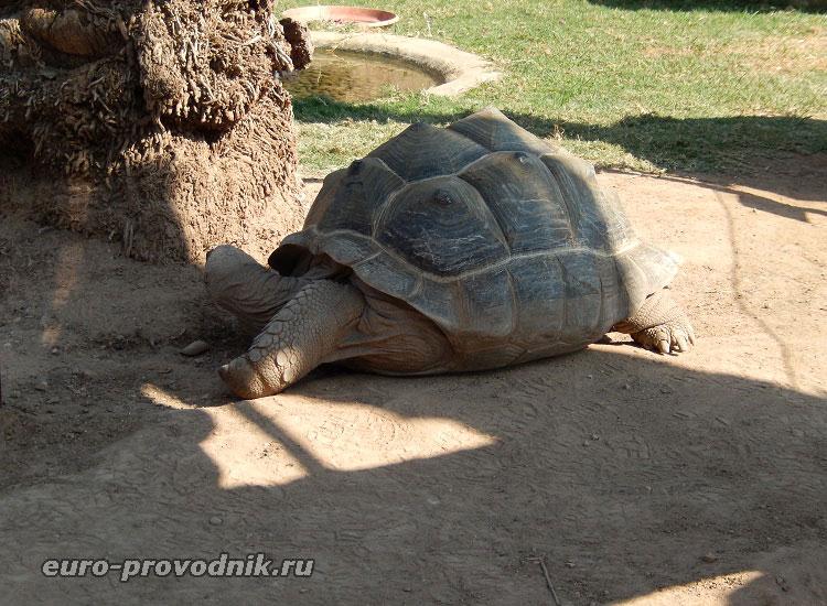 """Шагающая"" черепаха"