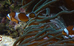 miniOceanografik