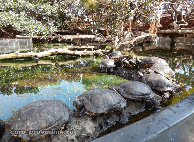 Солнечные ванны для черепашек