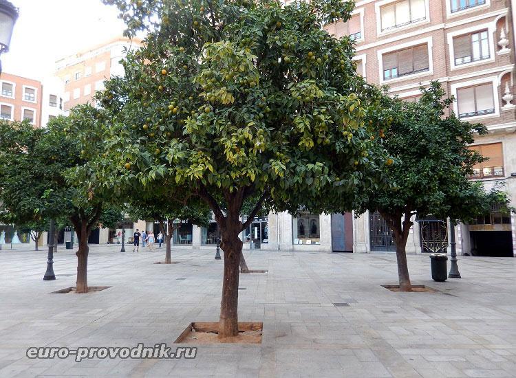 Апельсиновые деревья на площади