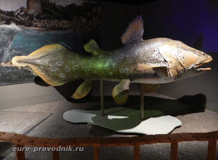 Рыба древности