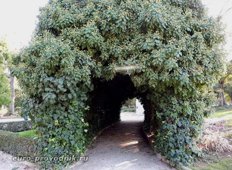 Цветочный туннель