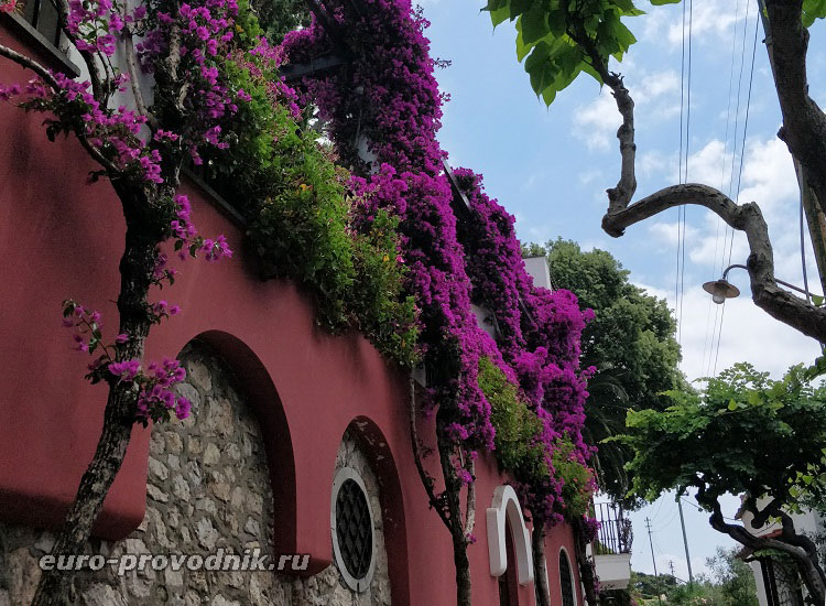 Цветущие улицы