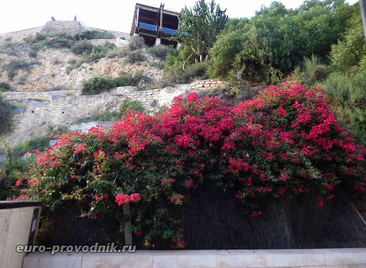 Цветы на обзорной площадке